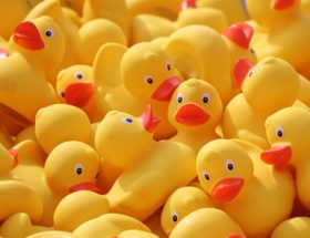 Hook a Duck Oxford Reading Tree 英語多読