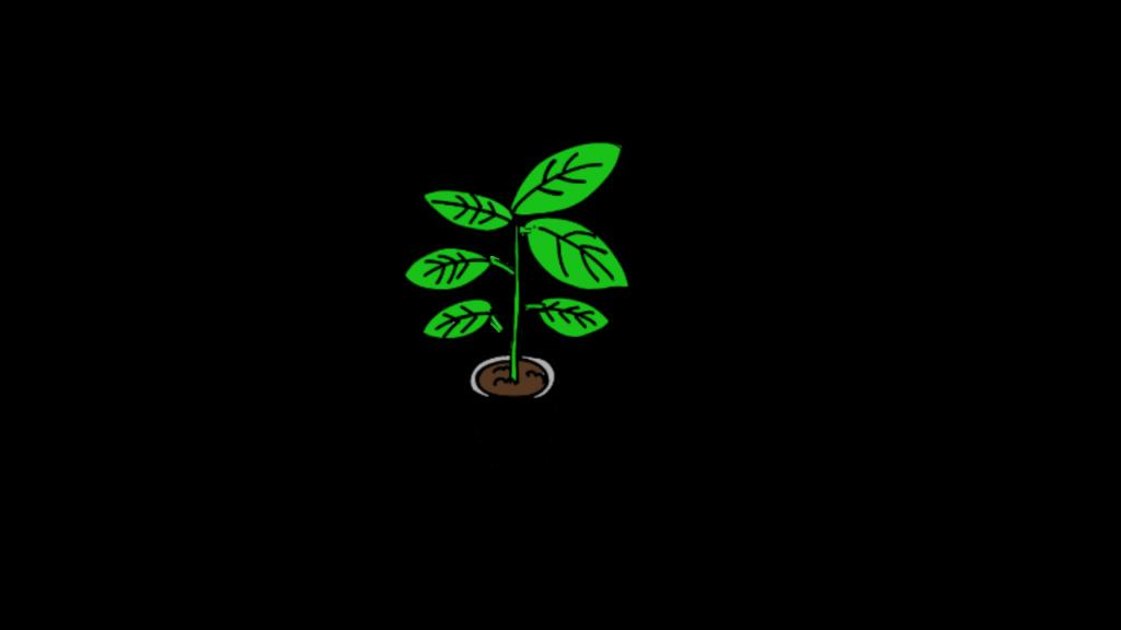 indoor plant kanyou shokubutsu